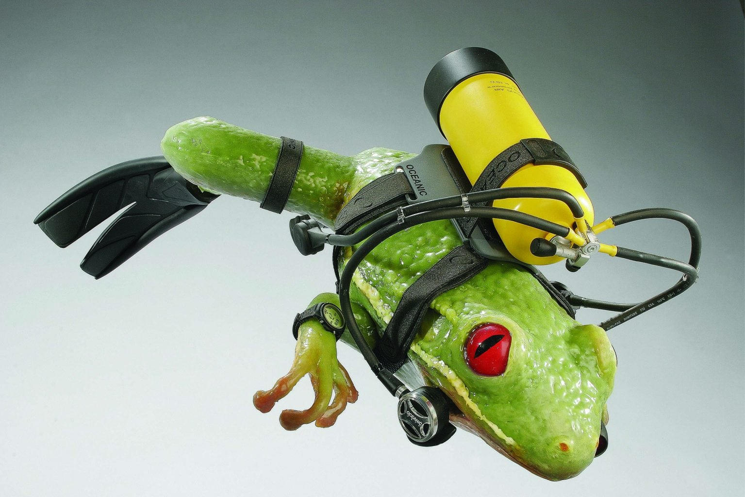 Frog model with diving equipment on