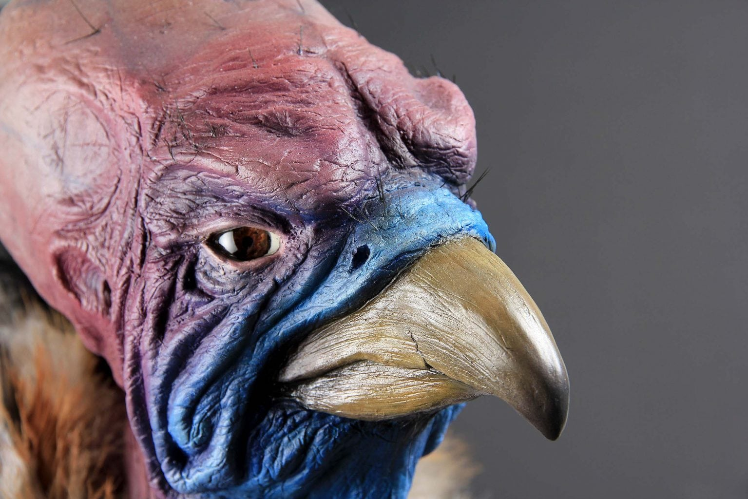 Model of a Vulture Character