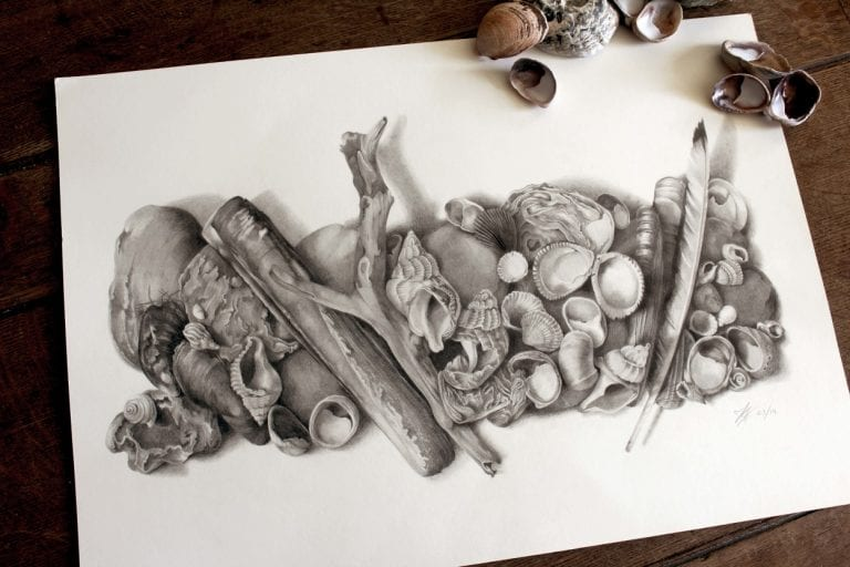 shells and driftwood drawn by pencil on paper